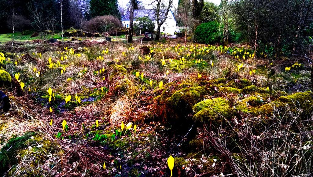 ardkinglas-spring-flowers